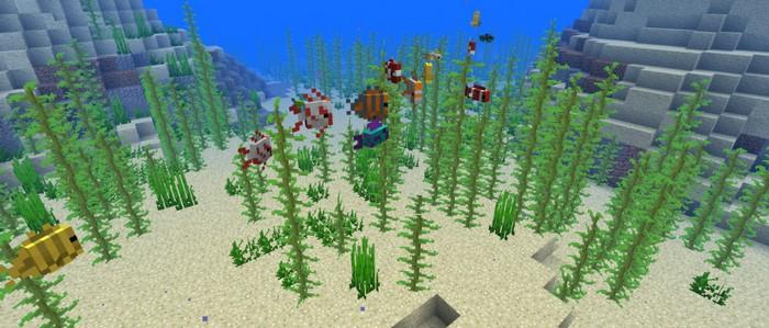 Новые рыбы и водоросли