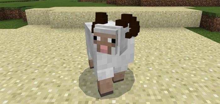 Овца с рогами